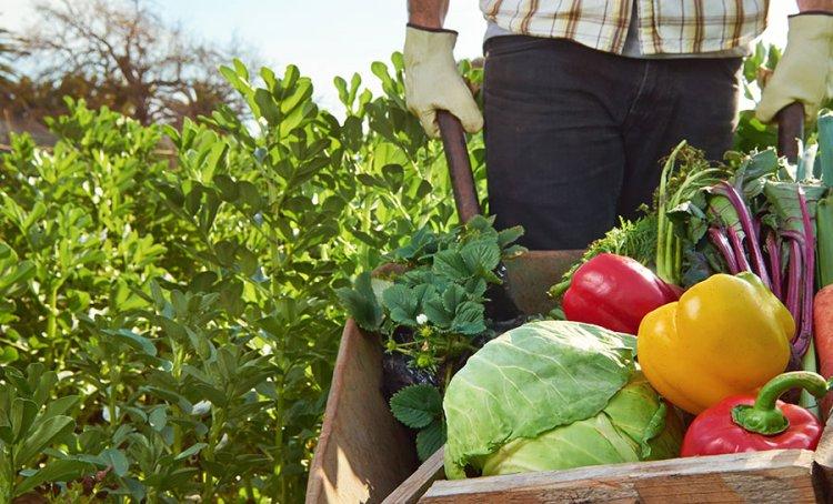 دعم الزراعة العضوية
